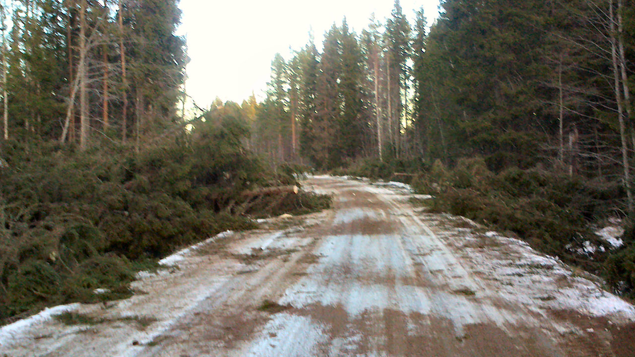 Trying to get to slide during the night-morning, little point without motoråg, preferably forestry.
