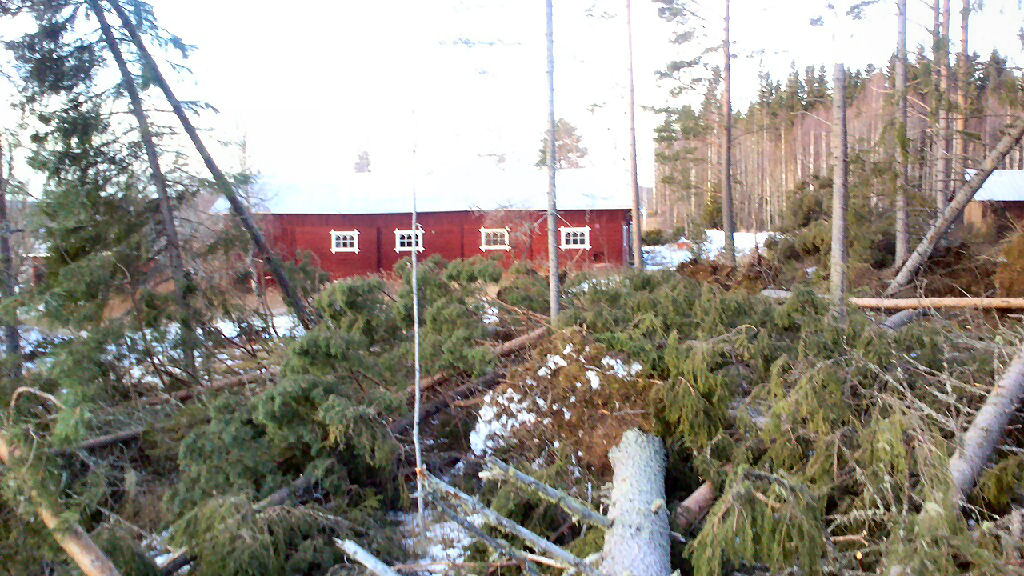 Only a few trees stood efters Ivars effects in the grove between Lindahl and Wikholms barn.