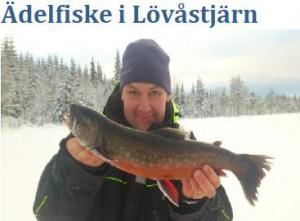 poissons de jeu dans Lövåstjarn.